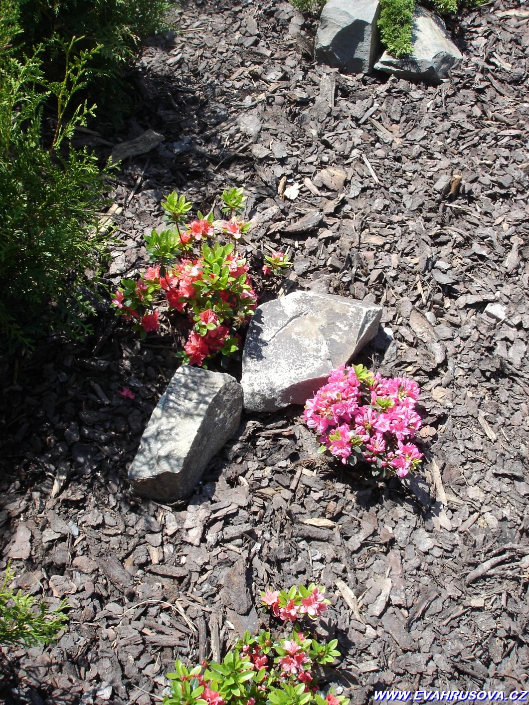 zahrada Lipník 002